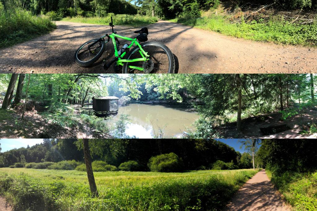 Biking Bad Dürkheim Radtour Pfälzer Wald Ferienwohnung Bad Dürkheim Fewo Maier